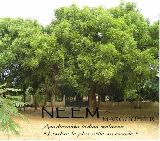 Le Neem